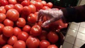 Het wijfje plukt tomaten in markt met de hand Close-upconcept selectie en het kopen fruit of rode groente stock video