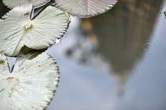 Het wijzen op van gouden pagode in de lotusbloemvijver Royalty-vrije Stock Foto