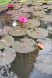 Het wijzen op van gouden pagode in de lotusbloemvijver Stock Foto's