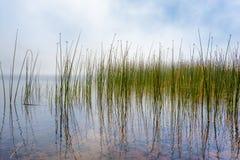 Het wijzen van op Tulies en Mist in Marie Lake royalty-vrije stock foto