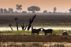 Het wild - Delta Okavango - Botswana Royalty-vrije Stock Foto's