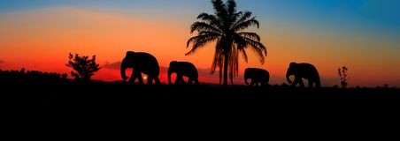 Het wild die van de olifantskuddedieren van het panoramasilhouet op de mooie achtergrond van de schemeringzonsondergang lopen Met stock afbeelding