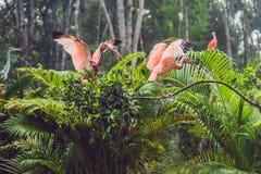 Het wild en regenwoud exotische tropische vogels in een vogelpark Royalty-vrije Stock Afbeeldingen