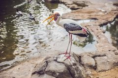 Het wild en regenwoud exotische tropische vogels in een vogelpark Stock Fotografie