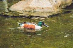 Het wild en regenwoud exotische tropische vogels in een vogelpark Royalty-vrije Stock Foto's