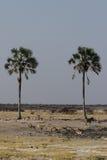 Het wild in Etosha Stock Foto's