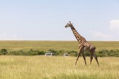 Het wild in Maasai Mara Park in Kenia stock foto's