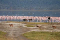 Het wild op Meer Nakuru stock fotografie