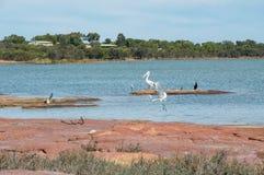 Het Wild van de Murchisonrivier Royalty-vrije Stock Foto's