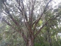Het Wild van Florida Royalty-vrije Stock Fotografie