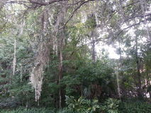 Het Wild van Florida Royalty-vrije Stock Foto's