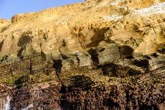 Het wild van het de klippengezicht van de Galapagos Stock Fotografie