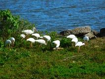 Het Wild van Melbourne, Florida Royalty-vrije Stock Foto