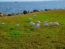 Het Wild van Melbourne, Florida Royalty-vrije Stock Afbeelding