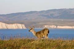Het wild van puntreyes national seashore. stock fotografie