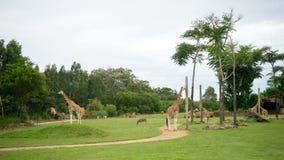 Het wilddierentuin Royalty-vrije Stock Afbeeldingen