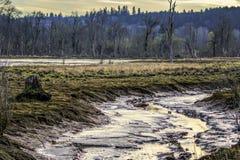 Het Wilddomein 2 van Nisqualli van getijdenvlakten stock afbeelding