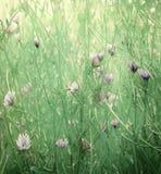Het wilde af:drukken van de bloemkunst op papier Royalty-vrije Stock Foto
