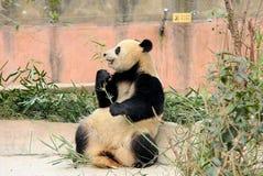 Het wilde dier en de vogels in Shenzhen-safaripark stock foto