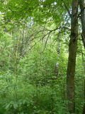 Het wilde hout in Noordwestrusland, dichtbij Heilige Petersburg Royalty-vrije Stock Foto's