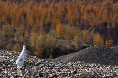 Het wilde konijn onderzoekt bos Stock Foto