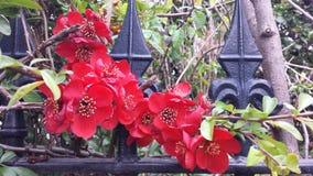 Het wilde leven door de weg, rode bloemenstruiken Royalty-vrije Stock Fotografie