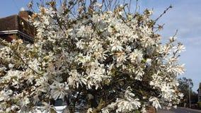 Het wilde leven door de weg, witte bloemenstruiken Stock Foto