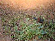 Het wilde leven Kerala stock foto