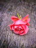 Het wilde roze wekt op Stock Afbeelding