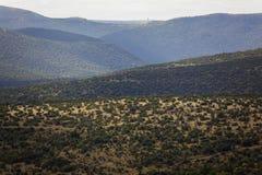 Het Wilde Terrein van de Valleien van de Heuvels van de Vegetatie van de Bomen van het aloë Royalty-vrije Stock Afbeeldingen