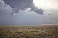 Het wilde vrije jachtluipaarden liggen Royalty-vrije Stock Afbeeldingen