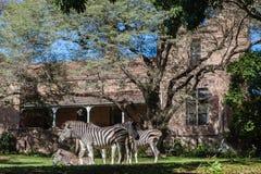 Het Wildlandschap van Zebras van het kasteelhuis Stock Foto