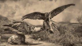 Het wildscène - het wildscène Stock Foto