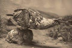 Het wildscène - het wildscène Stock Afbeeldingen
