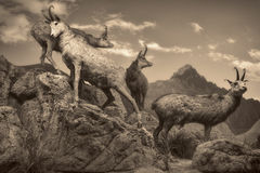 Het wildscène - het wildscène Royalty-vrije Stock Afbeelding