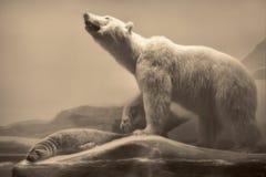 Het wildscène - het wildscène Royalty-vrije Stock Foto's