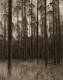 Het wildtoevluchtsoord van Okefenokee na de brand Stock Afbeeldingen