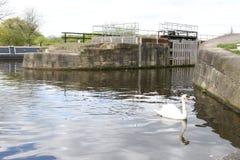 Het wildwatervogels Yorkshire Stock Fotografie