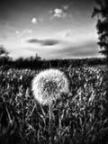 Het willekeurige onkruid groeien in Atchison Kansas Royalty-vrije Stock Afbeeldingen