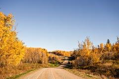 Het winden en heuvelige een grintweg door de herfstbos Stock Afbeelding