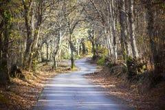 Het winden weg het uitrekken zich in een magisch bos stock afbeelding