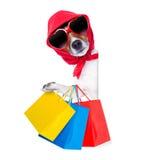Het winkelen diva hond Stock Afbeeldingen
