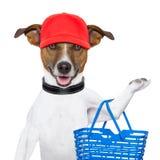 Het winkelen hond Royalty-vrije Stock Foto