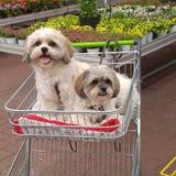Het winkelen met de honden Royalty-vrije Stock Foto's