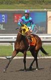 Het winnen van haar Eerste Race Stock Foto