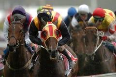 Het winnen van paardenrennen Royalty-vrije Stock Foto
