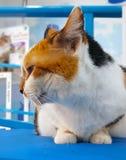 Het wit van de het profielmening van het kattengezicht stock foto
