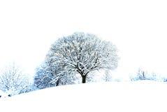 Het wit van de sneeuw Stock Afbeeldingen