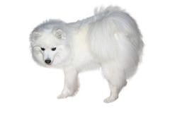 Het wit van de sneeuw Royalty-vrije Stock Foto
