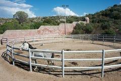Het wit zuiver-blooded Arabisch paard binnen een staaf stock afbeeldingen